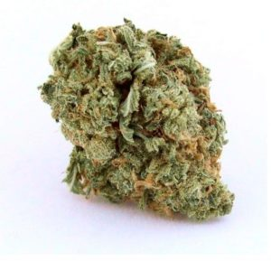 Blue Dream Marijuana, Blue Dream Weed, Buy Blue Dream Marijuana, Buy Blue Dream Marijuana Online, Buy Blue Dream Weed, Buy Blue Dream Weed India, Buy Blue Dream weed Online, Buy Blue Dream Weed UK, Buy Buy Blue Dream Weed In America, Buy Buy Blue Dream Weed In Australia, Buy Buy Blue Dream Weed In Austria, Buy Buy Blue Dream Weed In France, Buy Buy Blue Dream Weed In Germany, Buy Buy Blue Dream Weed In Hungary, Buy Buy Blue Dream Weed In Italy, Buy Buy Blue Dream Weed United Kingdom, Mail Order weed with Discreet Delivery Guarantee, MAIL ORDER MARIJUANA, mail order pot, mail order weed, mail order weed online, mail order weed usa, mail terra, mailing small amounts of weed, marijuana by state, marijuana chocolate, MARIJUANA CLONES FOR SALE, marijuana concentrate, marijuana dictionary, marijuana distillate, marijuana edibles for sale, marijuana edibles online, MARIJUANA FOR SALE, MARIJUANA FOR SALE ONLINE, marijuana online, marijuana online store, marijuana seed bank, Marijuana Strains, medical cannabis doctors, medical cannabis online, medical cannabis states, medical marijuana dispensary, medical marijuana online, medical marijuana online store,
