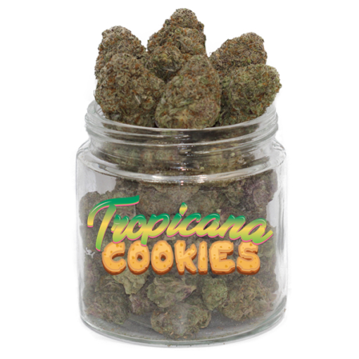 Buy Tropicana Cookies Weed Strain online Without Script, Buy Marijuana online, best cannabis strain, Tropicana cookies for sale online, Buy Cheap Afghan Kush, buy chocolates online, buy concentrates online, buy edibles, buy edibles online, BUY EDIBLES ONLINE REDDIT, buy edibles online ship anywhere, buy edibles online usa, buy edibles online without medical card, buy hash, buy hash online, buy illegal weed online, BUY LEGAL WEED ONLINE, buy marijuana, buy marijuana edibles, buy marijuana edibles online, BUY MARIJUANA ONLINE, buy marijuana online cheap, buy medical marijuana online, buy medical weed online, BUY REAL MARIJUANA ONLINE, BUY REAL WEED ONLINE, buy real weed online cheap, buy recreational weed online, buy salvia, buy shatter online, buy shatter online usa, BUY SKUNK ONLINE UK, BUY SYNTHETIC WEED ONLINE, buy terpenes online, buy thc cartridges online, buy thc edibles online, buy thc edibles online ship anywhere, buy thc gummies online, buy thc online, BUY VAPE PEN ONLINE, buy weed, buy weed canada, buy weed edibles online, BUY WEED ONLINE, buy weed online canada, buy weed online cheap, buy weed online usa, buy weed online without medical card, buying marijuana, BUYING WEED ONLINE, buying weed online reviews, buying weed online safe, california weed shops online, can i buy edibles online, can i buy marijuana online, can i buy weed online, can i order weed online, can u buy weed online, can you buy edibles online, can you buy marijuana online, Can you buy medical marijuana online, CAN YOU BUY WEED ONLINE, can you order edibles online, can you order marijuana online, can you order weed online, can you send weed in the mail, canada dispensary, candy online, cannabis buy, cannabis candy, cannabis chocolate, cannabis chocolate bar, cannabis com, cannabis distillate, cannabis edibles for sale, cannabis edibles online, cannabis online, cannabis online dispensary, cannabis online dispensary review, cbd distillate for sale, cbd shatter for sale, cheap edibles, cheap 